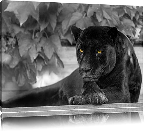 NOBRAND Pinturas sobre Lienzo Arte de la Pared Animal Hermosa Pantera Negra Negro/Blanco sobre Lienzo Lámina de Pared Cuadro Moderno Decoración para el hogar 80x120cm (31.5x47.2 Pulgadas) Sin Marco