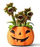 Hyde and Eek Animated Pumpkin with Dancing Singing Vines Halloween Decor