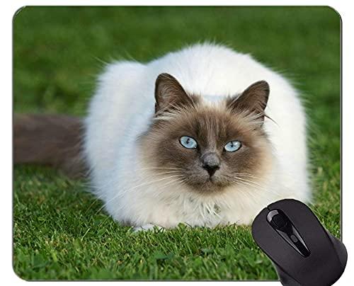 Mauspad mit genähter Kante,Himalaya Katze Tier Katze Gras Rutschfeste Gummiunterlage Mousepad