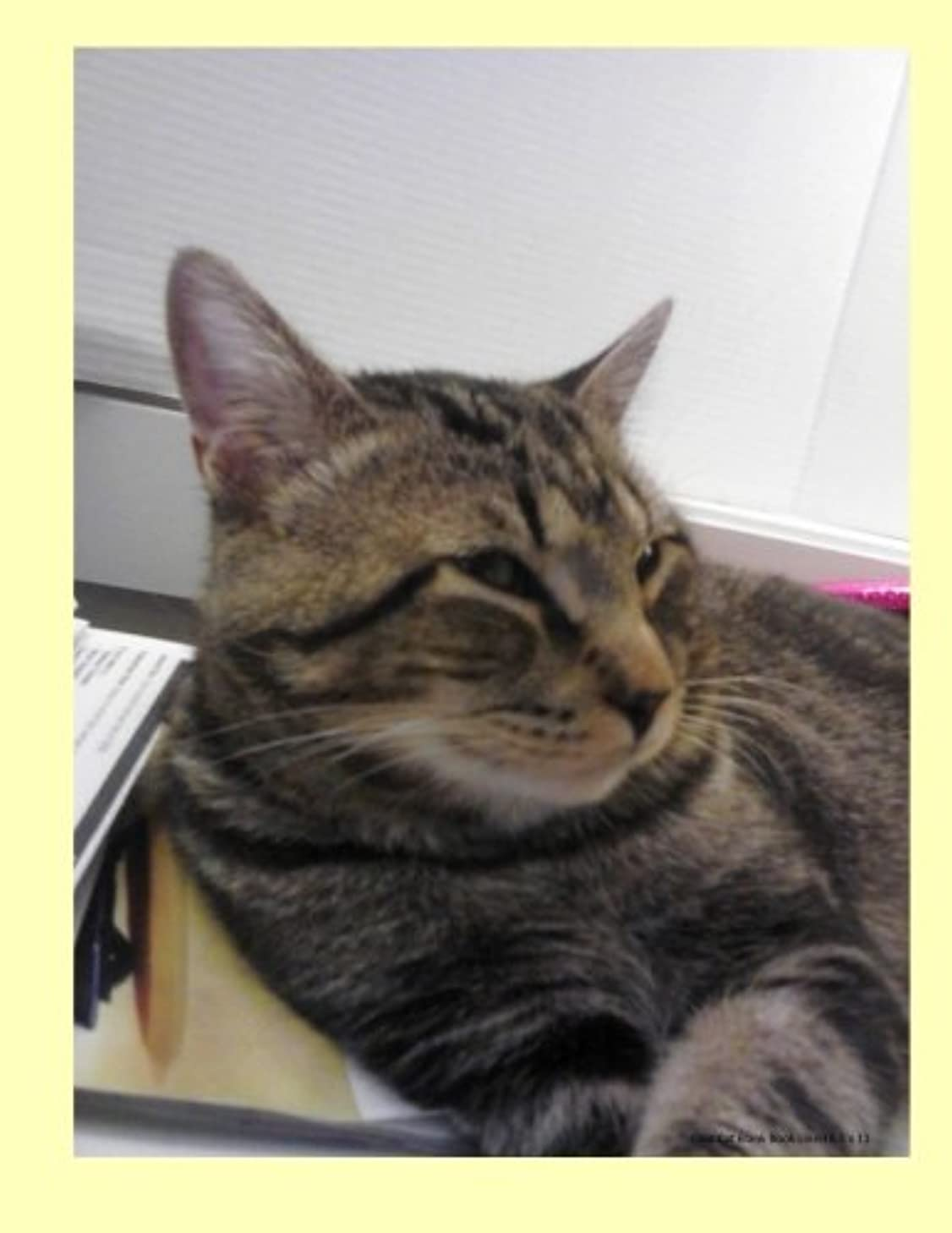 Cool Cat Blank Book Lined 8.5 x 11: 8.5 by 11 inch lined blank book suitable as a journal, notebook, or diary with a cover photo of a cool tabby cat ... feline leukemia. (Cats of Ralphie's Retreat)