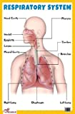 Respiratory System - Thick Laminated Primary Chart