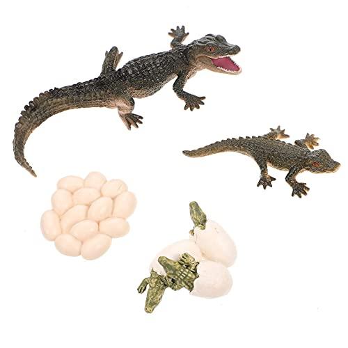 EXCEART Krokodil Groei Cyclus Dier Groei Cyclus Biologische Model Speelgoed Groei Levensechte Krokodil Levenscyclus Model Set Voor Kinderen Onderwijs Speelgoed
