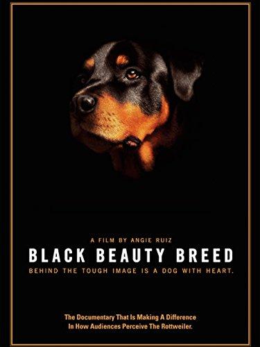 Black Beauty Breed