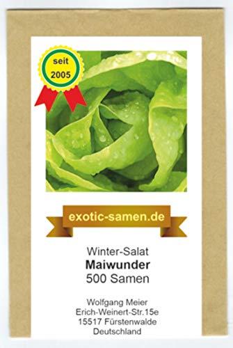 Winter-Kopfsalat - Maiwunder - 500 Samen