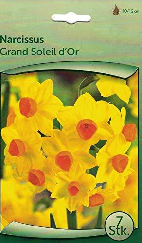 """35 Zwiebeln Narzissen\""""Grand Soleil d\'Or\"""" gelb- seperat verpackt - wunderschön, einfach, natürlich"""