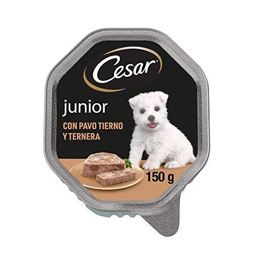 Cesar Comida Húmeda para Perros Cachorros Sabor Pavo y Ternera (Pack de 14 Tarrinas x 150g) ✅