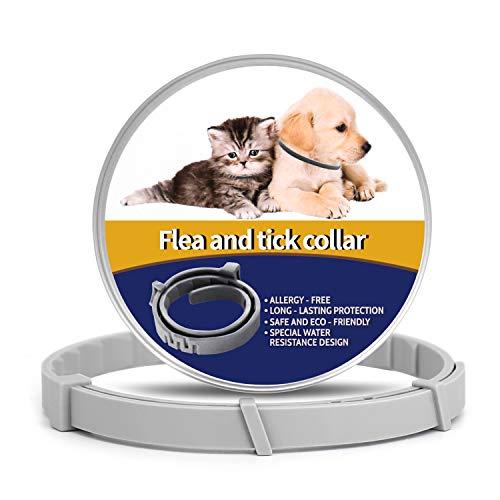 Ace Seller - Juguete chirriante para perro de mascotas, juguete de goma pequeña y chillón, color naranja