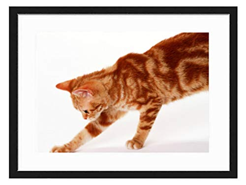 prz0vprz0v 8 x 12 inch zwart fotolijst goud en bruin kat decoratieve kunst prints en opknoping sjabloon, moderne fotolijst
