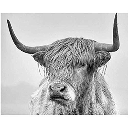 Hxfhxf Malen nach Zahlen DIY Grau Langhaarige Kuh Tier Leinwand Hochzeit Dekoration Kunst Bild Geschenk-40x50cm d