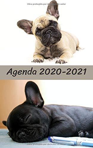 Agenda Escolar 2020 2021 / 300 páginas / Portada : BULLDOG FRANCES LINDO