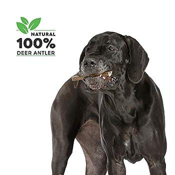 Bois de Cerf Tranché pour Chien 100% Naturel Corne Jouet Os a Mâcher, Taille Medium