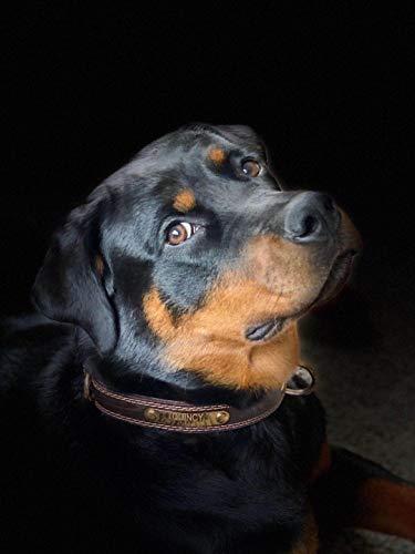 Premium-Hundehalsband aus Leder, mit graviertem Namensschild, personalisierbar, weiche Haptik, strapazierfähiges Echtleder, verstellbar, perfekt für kleine, mittelgroße, große Hunde - 6