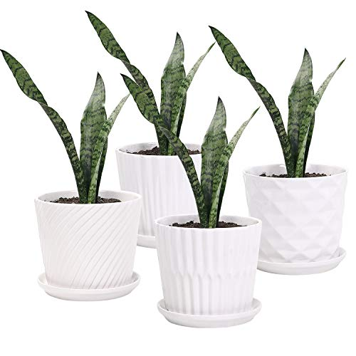 Plant Pots - 5.5 Inch Cylinder Ceramic Planters with Connected Saucer, Pots for Succuelnt and Little Snake Plants, Set of 4, White