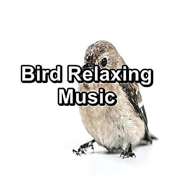 Bird Relaxing Music
