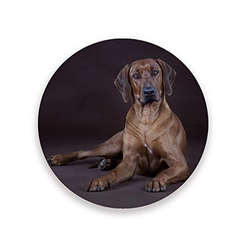 Posavasos absorbentes para bebidas, paquete de 2, Rhodesian Ridgeback Dog Round Ceramic Stone Coaster con base de corcho para mesa de madera, regalo de inauguración de la casa