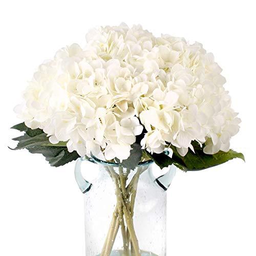 Planta Flor De Loto  marca Blooming Paradise