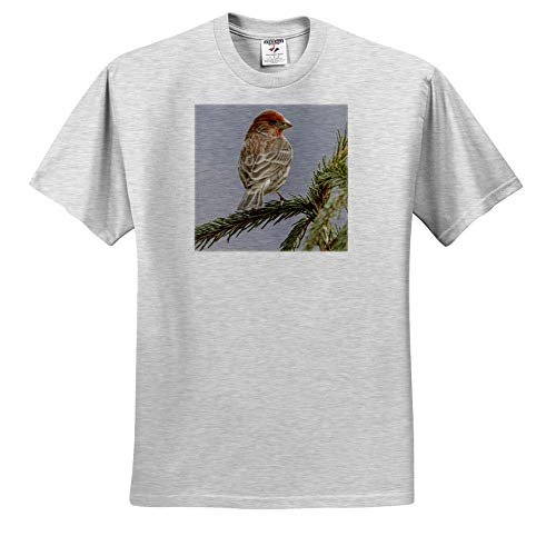 3dRose Danita Delimont - Birds - Male House Finch in Winter. - Youth Birch-Gray-T-Shirt Small(6-8) (ts_345310_28)