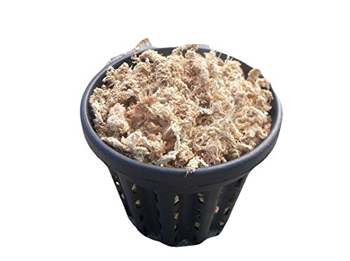 JoelsCarnivorousPlants One 7 Inch Root Pruning Pot with New Zealand Sphagnum Moss