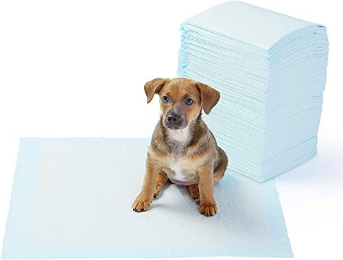 AmazonBasics Dog and Puppy Training Pads - Pack of 100, Regular (22 x 22 Inches)