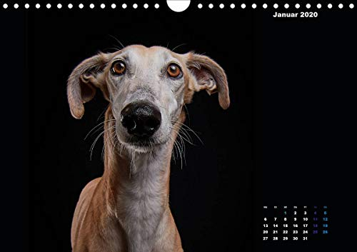 『Gier, M: Stimme der Windhunde (Wandkalender 2020 DIN A4 quer』の2枚目の画像