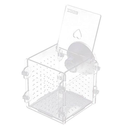Sharplace Boîte de Reproduction Aquarium Pondoir Isoloir Protection pour œuf de Poisson Ornement Aquarium - Carré