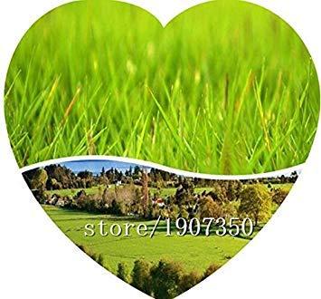 Big vente herbe Graines 100pcs / Graines de gazon sac Orginal emballage Plantes de jardin Ornement Décor jardin bricolage