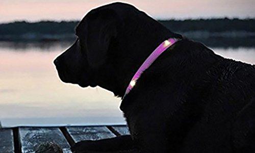 Top Shop - Collar ajustable para perro con luces LED, talla S con anillo en D rosa
