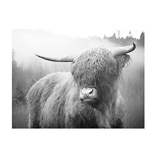 Nórdico negro blanco lindo divertido Highland vaca cuernos flequillo ganado animal lienzo pintura pared arte cartel dormitorio sala de estar oficina decoración mural