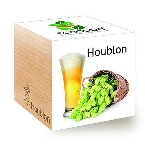 Feel Green Ecocube Houblon, Idée Cadeau (100% Ecologique), Grow-Your-Own/Kit Prêt-à-Pousser, Plantes Dans Des Cubes En Bois 7.5cm, Produit En Autriche