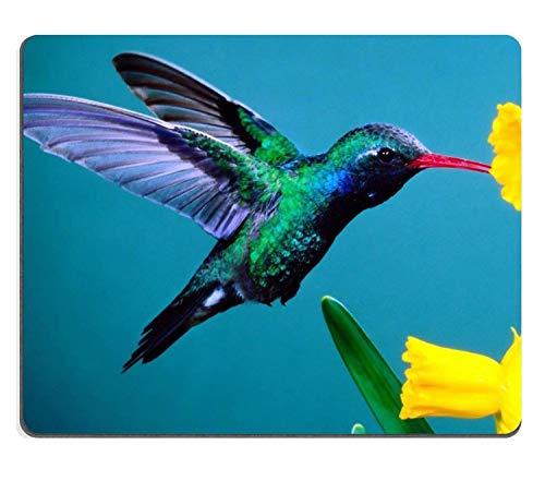Kolibri schöne Farben Pflanze Vogel Flug Nektar gelbe Blütenblätter Mauspads maßgeschneidert auf Bestellung Unterstützung bereit hochwertige hochwertige umweltfreundliche Tuch mit Neopren Gummi liil M