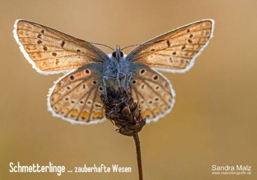 """Schmetterlinge ... zauberhafte Wesen (Tischaufsteller DIN A5 quer): """"Was die Raupe Ende der Welt nennt, nennt der Rest der Welt Schmetterling."""" ... (CALVENDO Tiere) [Sep 17, 2013] Malz, Sandra"""
