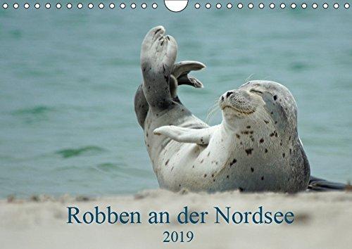 Robben an der Nordsee (Wandkalender 2019 DIN A4 quer): Ein Kalender für alle Robbenliebhaber (Monatskalender, 14 Seiten ) (CALVENDO Tiere)