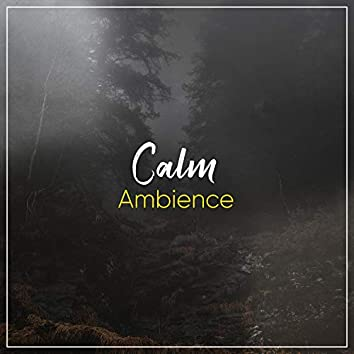 2020 Calm Ambience