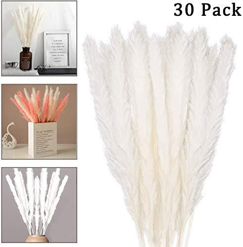 30 Piezas Pampas Hierba Seca decoración, jarrones de Flores secas Flores secas 60cm, Flores Blancas balcón del Dormitorio Sala de Estar Sala de baño decoración de la Mesa de la Boda de Boho Deco