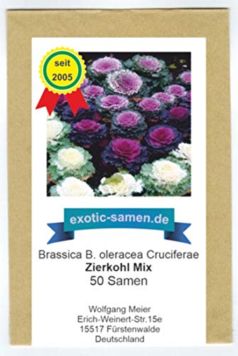 Zierkohl - Brassica B. oleracea Cruciferae - 50 Samen