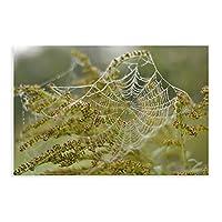 天然植物ポスタークモの巣と花1キャンバス絵画ポスターリビングルーム寝室の装飾オフィス寮の装飾ギフトアンフレーム:16×24インチ(40×60cm)