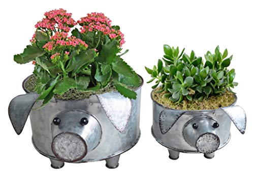 ShabbyDecor Galvanized Pig Standing Bowl for Fruit Container or Decorative Greenery Planter Set of 2