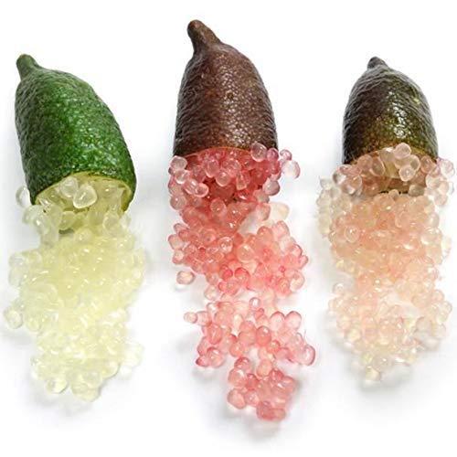 Portal Cool 4: 20Pcs frutta tropicale semi Finger Limes Citrus melograno Per la casa Giardino Balco