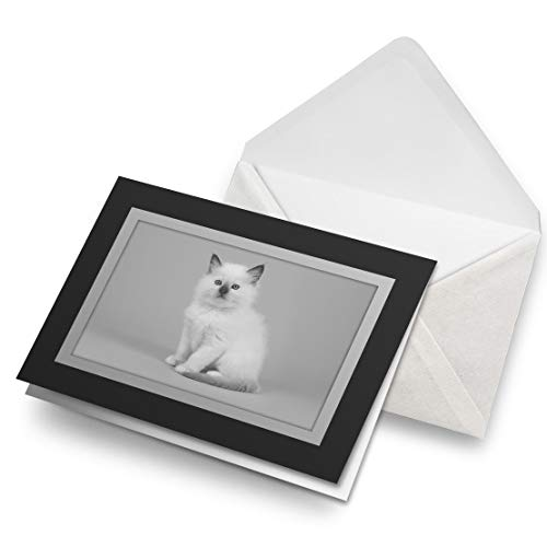 Fantastico biglietto di auguri nero (inserto) BW – bianco cucciolo Ragdoll gattino gatto bianco bianco biglietto di auguri compleanno bambini festa ragazzi ragazze #42516