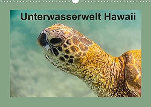 Unterwasserwelt Hawaii (Wandkalender 2022 DIN A3 quer)