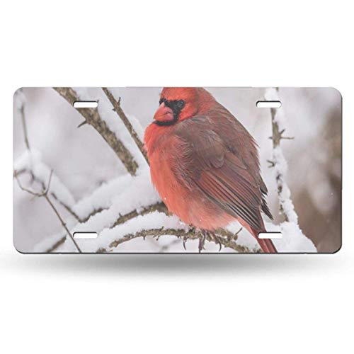 BRIGHT JUNAY Cool Metal License Plate,Bird Red Animal Northern Cardinal in The Snow White Car Front License Plate 6 Inch X 12 Inch
