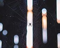 数字で描くアクリル絵の具の色原稿クモの巣織り光の絵を描くリビングルームアクリルユニークな子供ギフトリネンの装飾アート カスタマイズ可能 40x50cm DIYフレーム