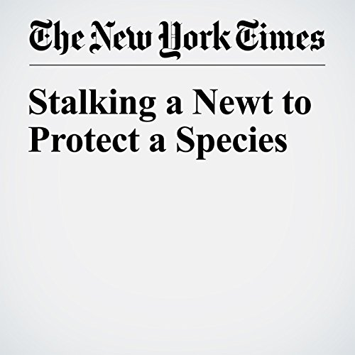 Stalking a Newt to Protect a Species audiobook cover art