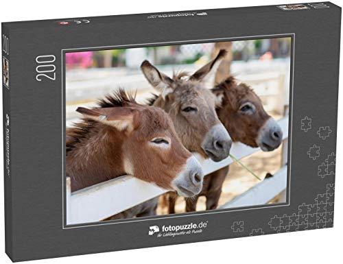 fotopuzzle.de Puzzle 200 Teile DREI Pferde oder Esel auf der Farm Kopf von Paar braunes Pferd oder Esel im Stall Pferd oder Eselsliebhaber und Dritte