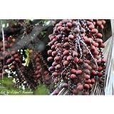 Buriti 1792 - Aceite aromático para vela y jabón de frutas amazónicas - Suministro de alto...