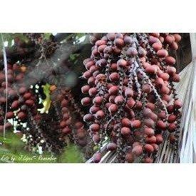 Buriti 1792 - Aceite aromático para vela y jabón de frutas amazónicas - Suministro de alto rendimiento – 16 oz (1 lb) – Promoción especial