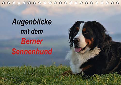 Augenblicke mit dem Berner Sennenhund (Tischkalender 2021 DIN A5 quer)