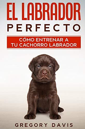 El Labrador Perfecto: Cómo Entrenar a Tu Cachorro Labrador