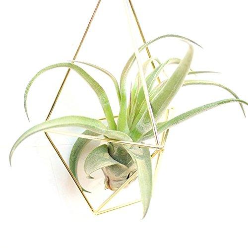 Quanjucheer géométrique à suspendre Air Plante Succulente Triangle support de rack de fleurs Home Garden Décoration murale (pas de fleurs) 12.5cm x 8cm x 21cm doré