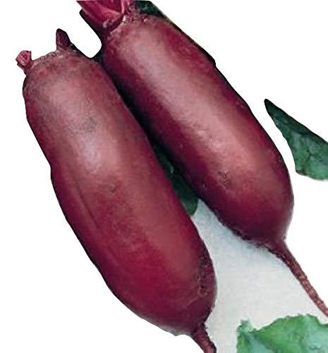 Ungarische grosse Rote Beete (Cylindra),100 Samen, samenfest von unserer Farm, BIO hu-öko-01
